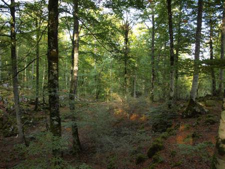 navarre: autumn in the forest in Aralar  Navarre  Stock Photo