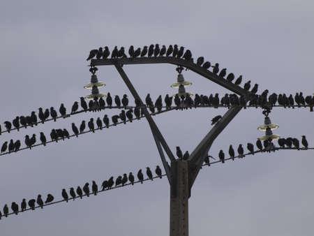 ebro: stormo di uccelli nella valle dell'Ebro in autunno Archivio Fotografico