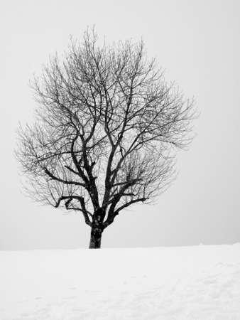 navarre: winter in aralar  Navarre