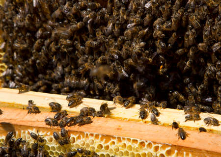 apiculture: apiculture and honey bees working Stock Photo
