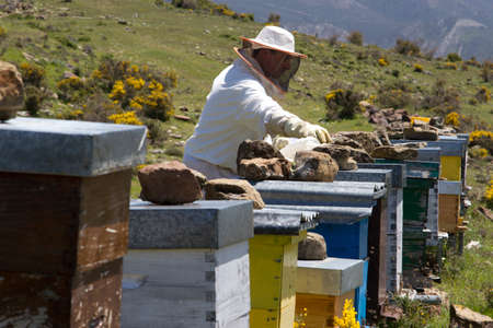 apiculture: apiculture and honey bees working Editorial