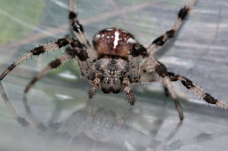 Closeup face of giant spider photo