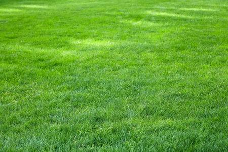 meadow  grass: rayos de sol en la pradera de c�sped, verde intenso.