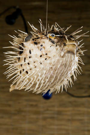 Stuffed ballfish hanging from the ceiling
