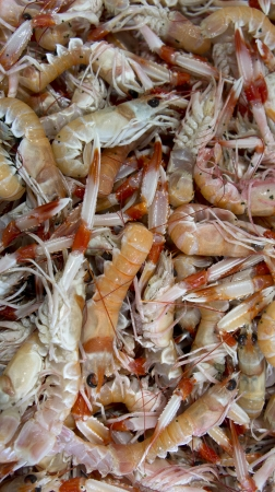 Prawns in the market photo
