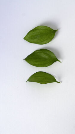 stock photos: Leaves of various shapes on white background