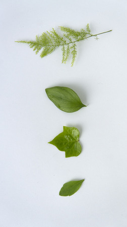 free stock photos: Leaves of various shapes on white background