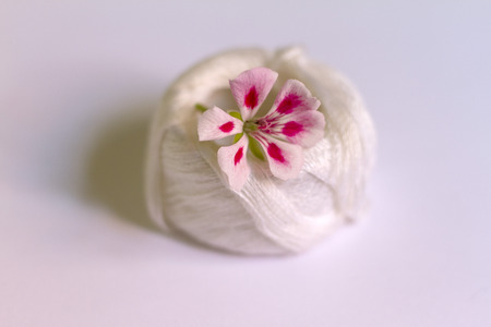 A two-tone geranium flower of pink on embroidery threads Banco de Imagens - 81221039