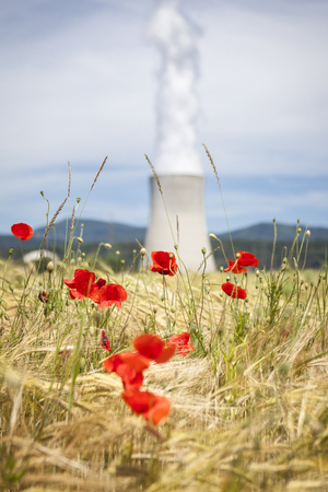 Corn poppies and cooling tower of a nuclear power station photo