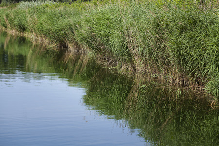 biotope: Humid biotope in natural reserve, reeds Stock Photo