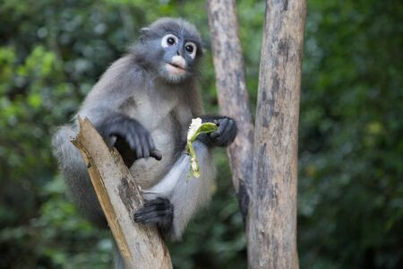 wildllife: Monkey