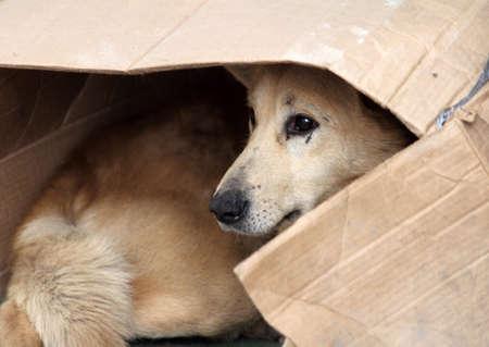stray: Street dog