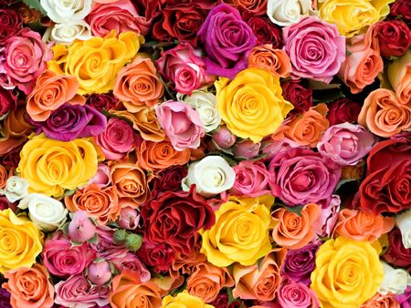 claret: different roses, white, yellow, rose, red, claret, orange