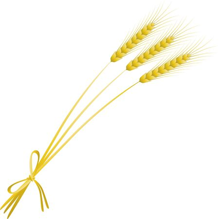 three ripe spikelets of wheat connected with straw against the white background photo