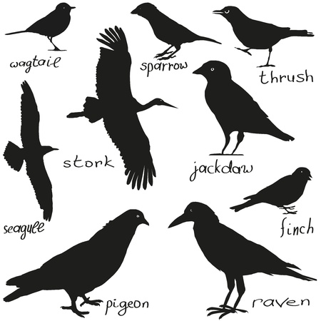A set of silhouettes of different birds in black Vector