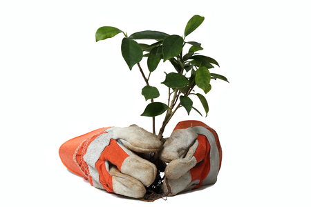 trusty: Trusty orange gloves  and plant with clipping path