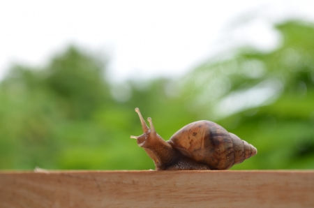 The journey of a snail  photo