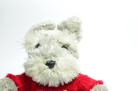 Teddy bear on a white background  photo