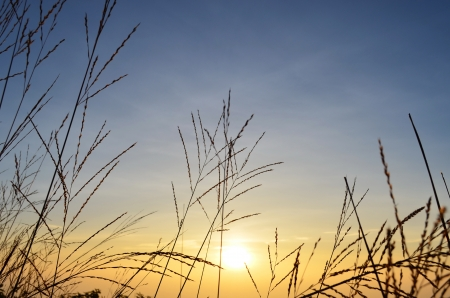 Shadow meadow and sun on the horizon  photo