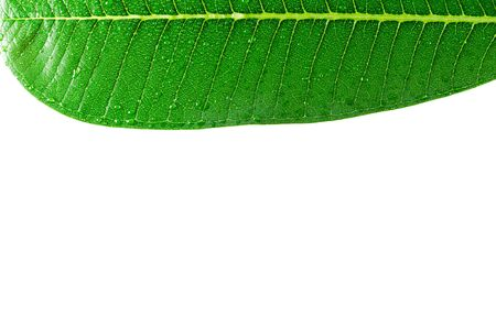 Leaves with drops of water on a white background. Stockfoto