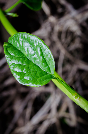 Close up photos of green leaves