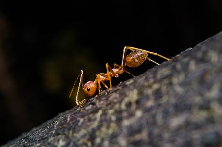 Close up photos of ants Stockfoto
