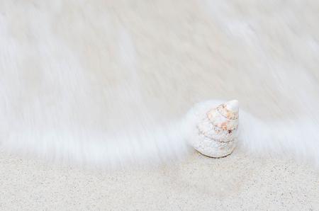 Photos of sea shells in Thailand