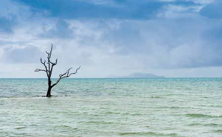 Photo Trees in the Sea of Thailand