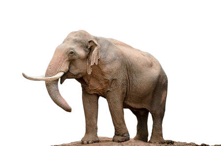 Image of Thai elephants on a white background
