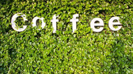 coffee in green