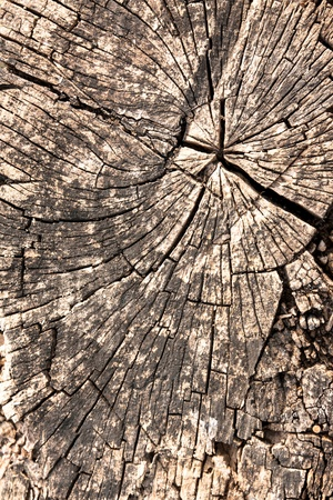 tree stump photo