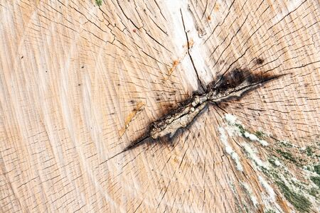 tree stump texture photo