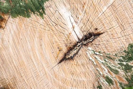 tree stump texture photo