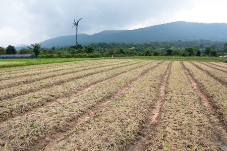 Organic vegetable garden and mountains in Nakhon Ratchasima, Thailand  photo