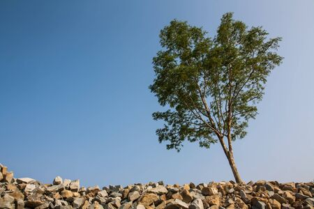 groub of granite rocks construction materials and tree in blue sky background  photo