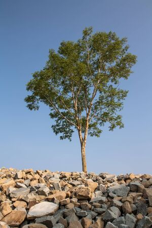 groub of granite rocks construction materials and tree in blue sky background  Stock Photo - 15869450