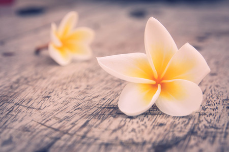 frangipani falling on the wooden photo