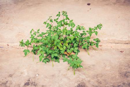 plant growing in concrete floor in vintage tone