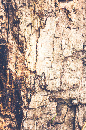 Old wood texture vintage tone photo