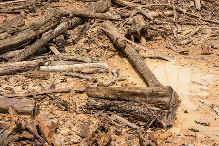 old log on cultivated land