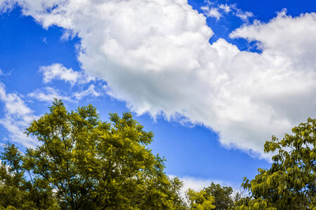 Up view on tree and clouds on blue sky photo