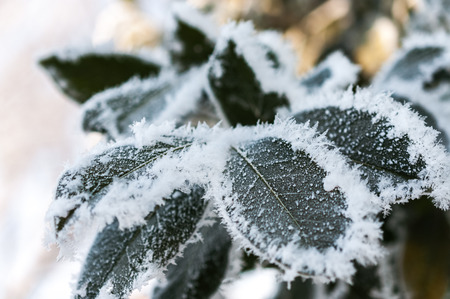 getting late: The late fall transmitted to an early winter when the first frost comes and the leaves getting white frost edges