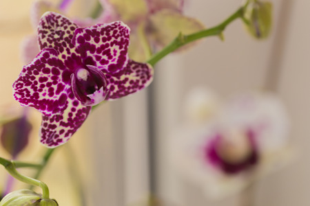 retty Blooming Purple Orchid flower - Image 免版税图像