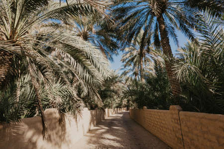 View of the unesco enlisted oasis in Al Ain, UAE - Image
