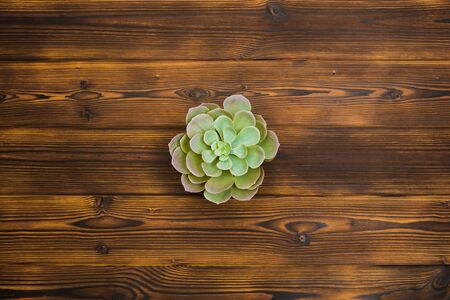 Succulent on wooden background. Top view - Image