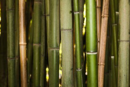 sfondo natura boschetto di bambù - Image Archivio Fotografico