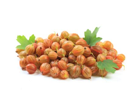 gooseberry isolated  on white background - Image