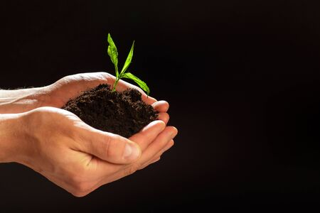 World environment day concept: The mans hands holding a small tree. Two hands holding a light green tree. holding seedlings isolate.Seedlings are growing in the days ahead.