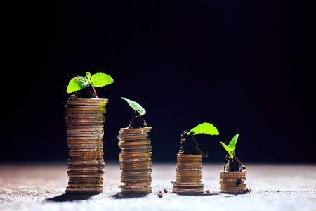 Jeune plante dans le sol sur le dessus de la pile de pièces, fond noir, isolé, investissement, concept de croissance d'entreprise, espace de copie.