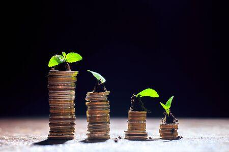 Young plant in soil on the top of coin stack,black background,isolated,investment,business growth concept,copy space.